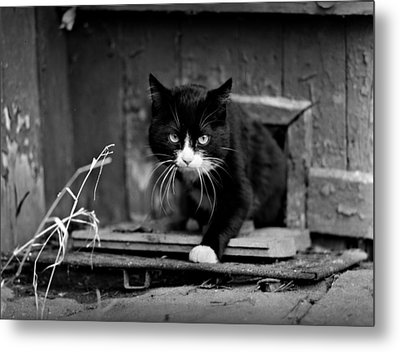 Determined Cat Metal Print by Evgeny Govorov