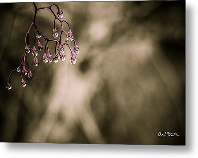 Dew Berries Metal Print