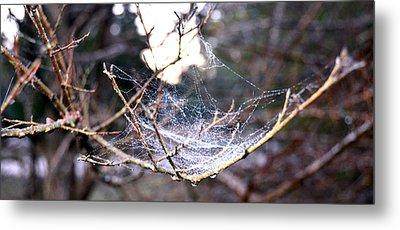 Dew Covered Spiderweb Metal Print by Julie Cameron