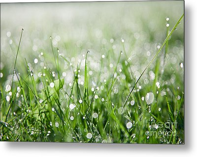 Dew Drenched Morning Metal Print