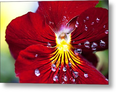 Dew Drops Metal Print