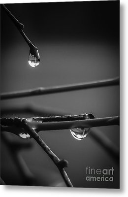 Dew Drops Metal Print by Michael Canning