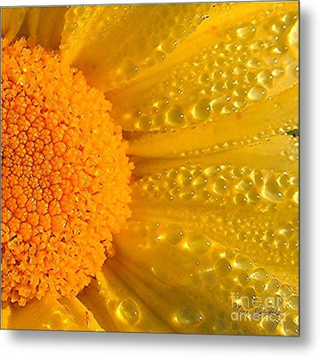 Metal Print featuring the photograph Dew Drops On Daisy by Terri Gostola