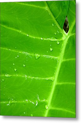 Dew Of Little Things Metal Print by Soul Full Sanctuary Photography