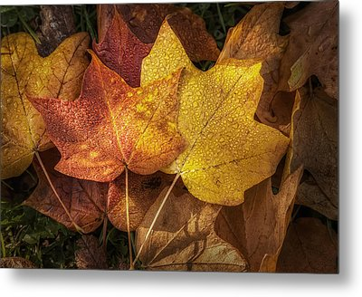 Dew On Autumn Leaves Metal Print by Scott Norris