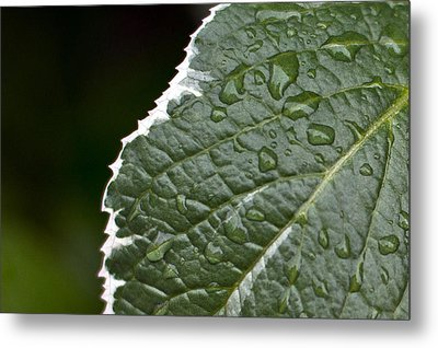 Dew On Leaf Metal Print
