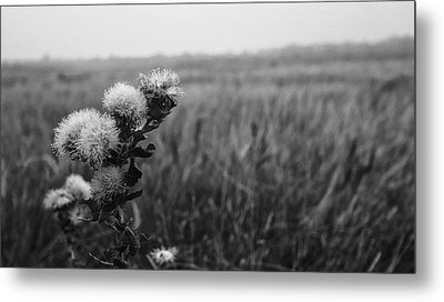 Metal Print featuring the photograph Dew by Yvonne Emerson AKA RavenSoul