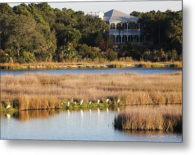 Dewees Island 2552 Metal Print by Cleaster Cotton