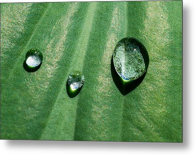 Diamonds Are Forever - Featured 3 Metal Print by Alexander Senin