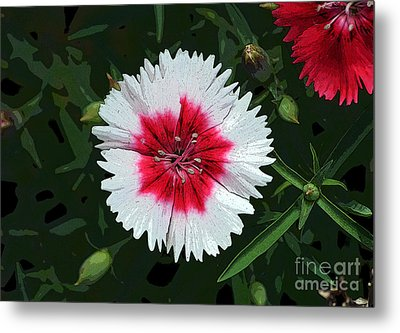 Dianthus Red And White Flower Decor Macro Cutout Digital Art Metal Print by Shawn O'Brien
