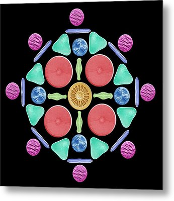Diatoms And Radiolaria Metal Print by Steve Gschmeissner
