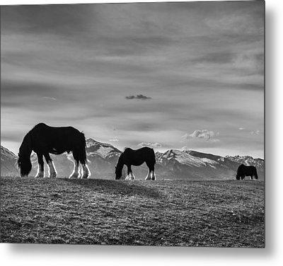 Dick's Horses Metal Print by Dianne Arrigoni