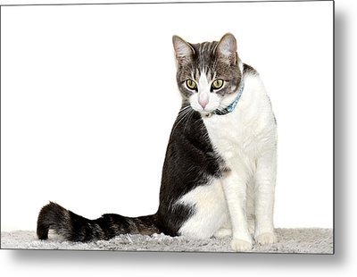 Did I Hear A Mouse Metal Print