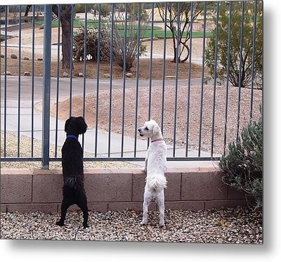 Did You See That? Metal Print by Sheila Byers