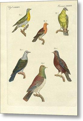 Different Kinds Of Exotic Pigeons Metal Print by Splendid Art Prints