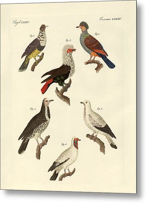 Different Kinds Of Foreign Pigeons Metal Print by Splendid Art Prints