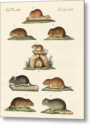 Different Kinds Of Mice Metal Print