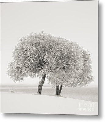 Different Season Metal Print