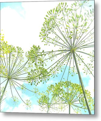 Dill Garden Metal Print by Tracy Male