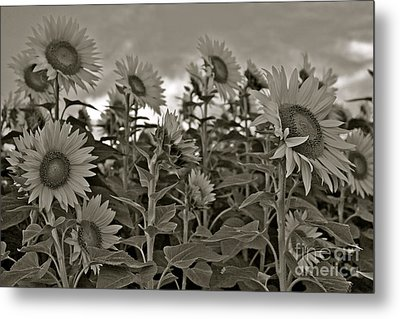 Metal Print featuring the photograph Dimming The Lights by Alice Mainville