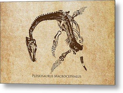 Dinosaur Plesiosaurus Macrocephalus Metal Print by Aged Pixel