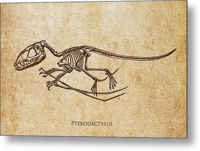 Dinosaur Pterodactylus Metal Print by Aged Pixel