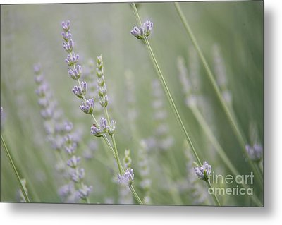 Metal Print featuring the photograph Direction .... by Lynn England