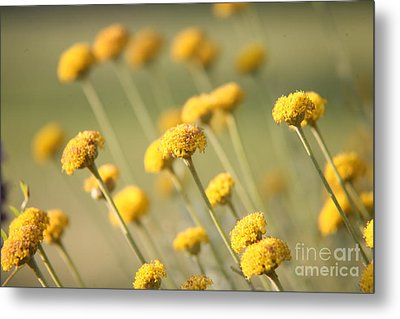 Metal Print featuring the photograph Direction In Yellow..... by Lynn England