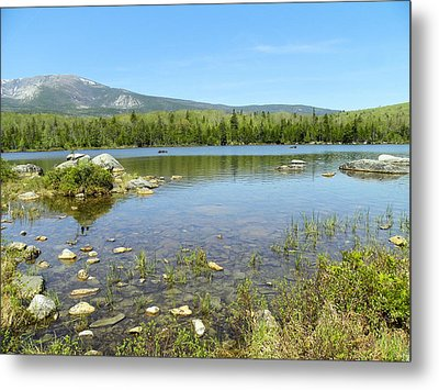 Metal Print featuring the photograph Distant Moose by Gene Cyr