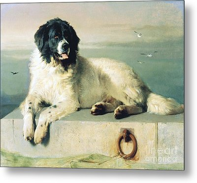 Distinguished Member Of The Humane Society Metal Print by Pg Reproductions