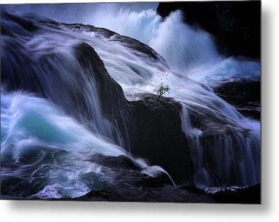 Metal Print featuring the photograph Distractions by Philippe Sainte-Laudy