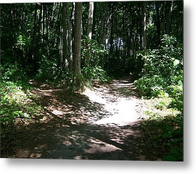 Diverging Path In The Woods Metal Print