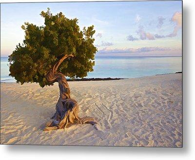 Divi Divi Tree Of Aruba Metal Print by David Letts