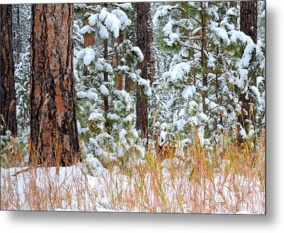 Do You See Me Metal Print by Clarice  Lakota
