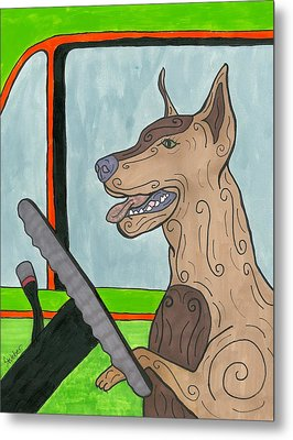 Doberman Driving Metal Print