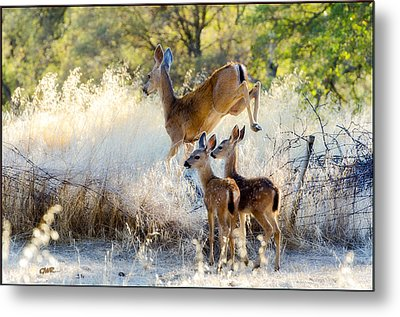 Doe And Fawns... Metal Print