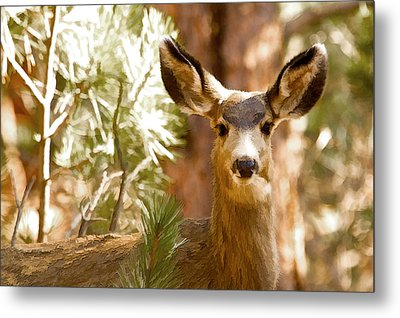 Doe Awareness Metal Print