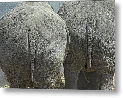 Does My Butt Look Big Metal Print by Donna Blackhall