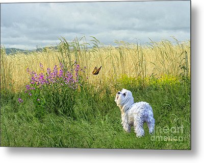 Dog And Butterfly Metal Print by Andrea Auletta
