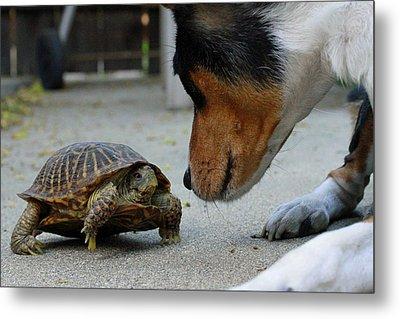 Dog And Turtle Metal Print