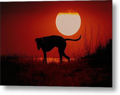 Dog At Sunset Metal Print by Jana Thompson