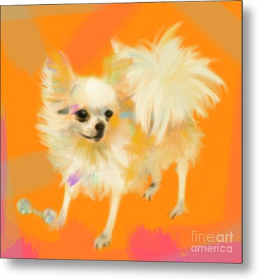 Dog Chihuahua Orange Metal Print