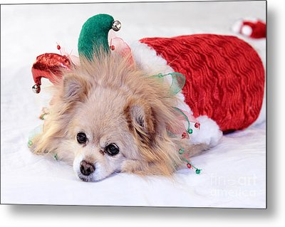 Dog In Christmas Costume Metal Print by Charline Xia