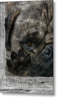Dog In The Window Metal Print by Jack Zulli