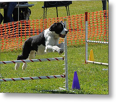 Metal Print featuring the photograph Dog Obedience by Paul Miller