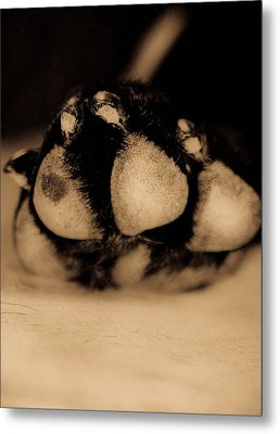 Dog Paw Metal Print by Jamie Bishop