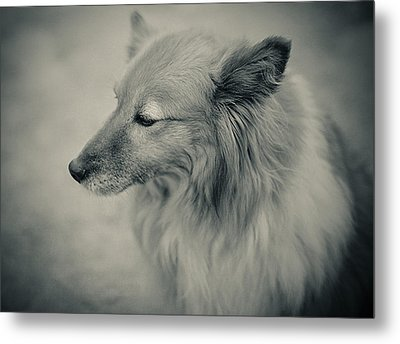 Lonely Dog Metal Print by Pro Shutterblade
