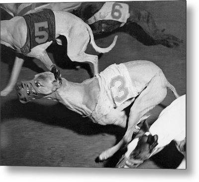 Dog Racing Track Metal Print by Underwood Archives
