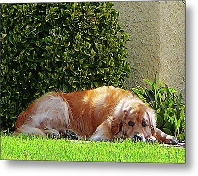 Dog Relaxing Metal Print by Susan Savad