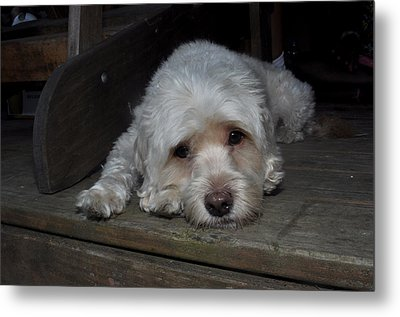 Dog Resting On Porch Metal Print